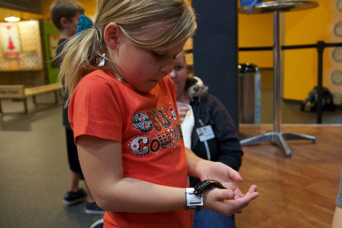 A child holds at Madagascar hissing cockroach at Science Museum Oklahoma