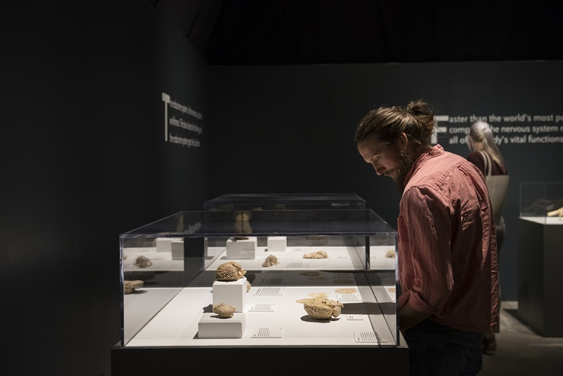 Bodies Revealed at Science Museum Oklahoma