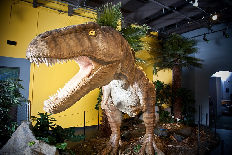 Acrocanthosaurus in Science Museum Oklahoma's Red Dirt Dinos