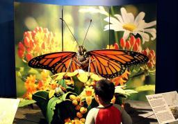 backyard bugs at science museum oklahoma